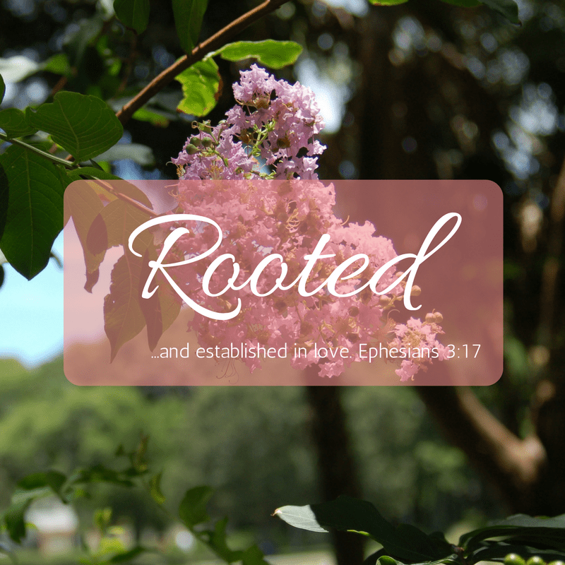 Choose your word for 2017. Mine is Rooted. -tabithadumas.com