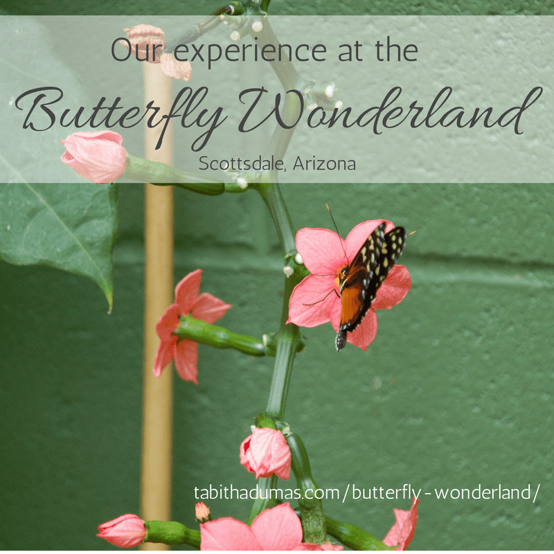Butterfly Wonderland Scottsdale, Arizona on tabithadumas.com